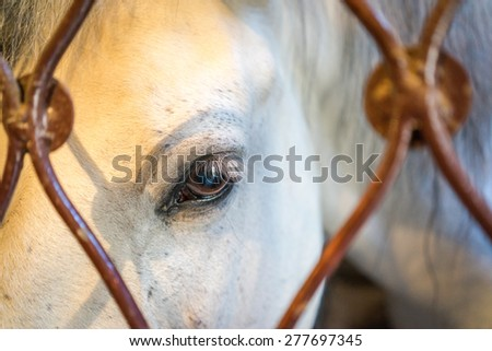 A close up landscape of the eye and head of a palomino white horse behind the fence - stock photo