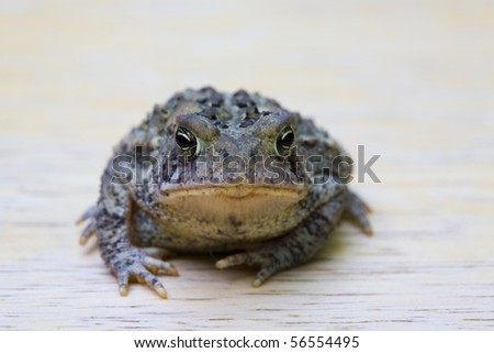 A close up look at a toads face particularly the eyes.