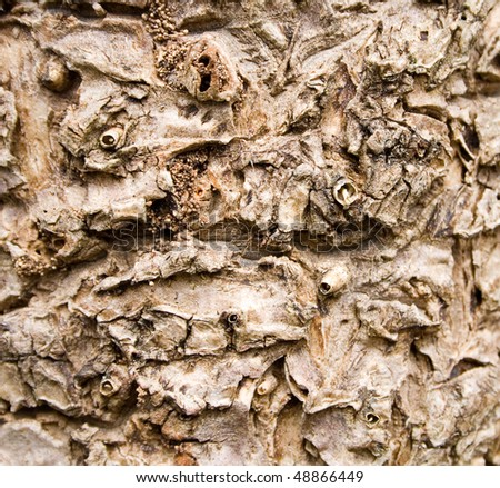 A close up of a bark texture pattern on a cabbage tree - stock photo