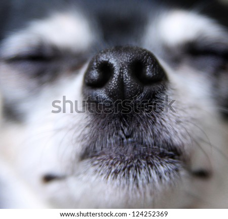 a close up of a dog nose - stock photo