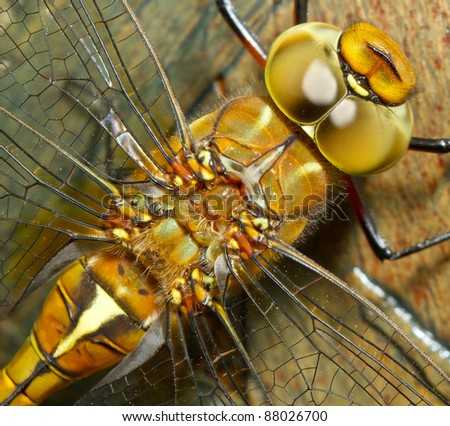 A close-up of a dragonfly - stock photo