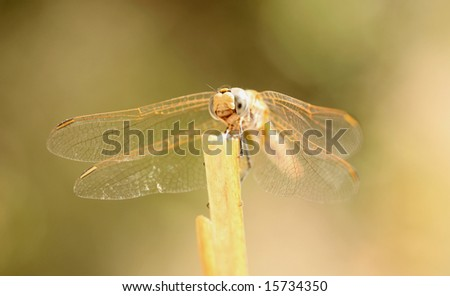 A close-up of a dragonfly perched on a green stem
