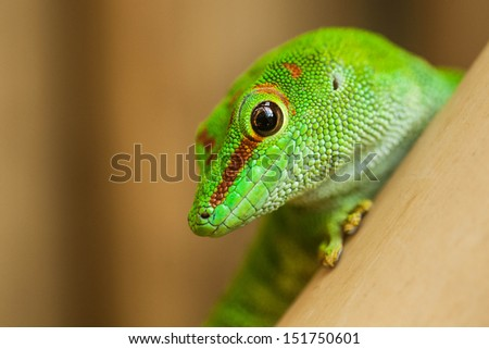 A close up of a green lizard - stock photo