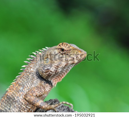 A close up of a lizard on green background - stock photo