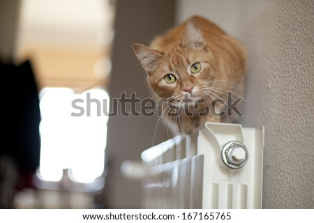 A close up of a orange pussy cat. - stock photo
