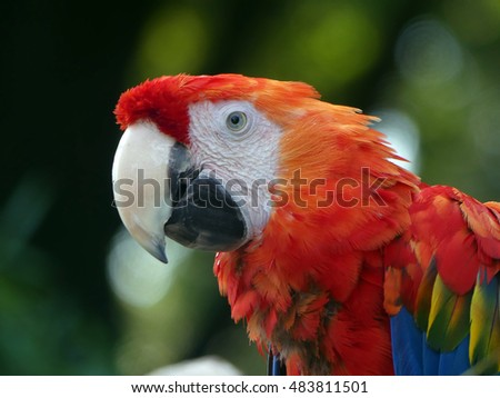 A close-up of a parrot