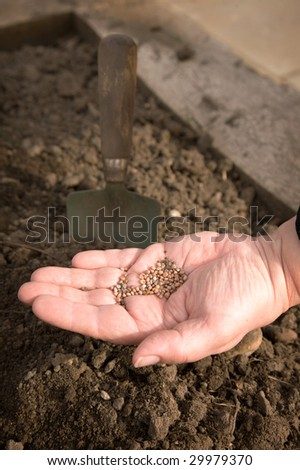 A close-up of a woman's hand holding seeds, about to plant them. - stock photo
