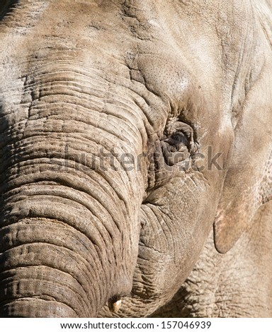 A close-up of an Elephant - stock photo