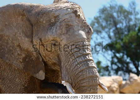 A close up of an elephant with a natural background