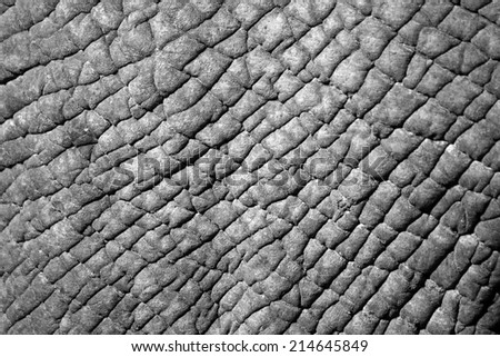 A close up of an elephants skin in black and white. - stock photo