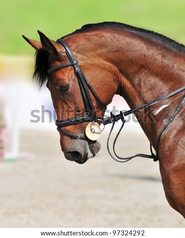 A close-up of beautiful jumping bay horse during the show jumping test. - stock photo