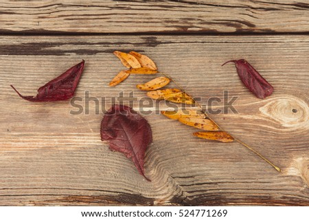 A close up of fall leaves on a wooden bench.