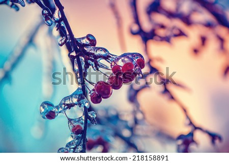 A close up of ice covered crab apples on a tree.  Photographed with a shallow depth of field.  Filtered for a retro, vintage look.  - stock photo