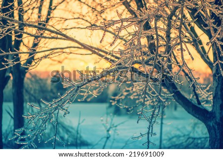 A close up of ice covered tree branches in the glow of the setting sun light after an ice storm.  Filtered for a retro, vintage look.  - stock photo