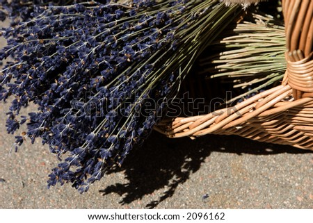 A close up of lavender petals showing off their softness and wonderful relaxing aroma. - stock photo