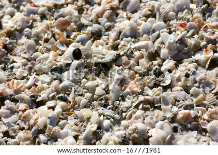 A close up of sand and shells on a Florida beach  - stock photo