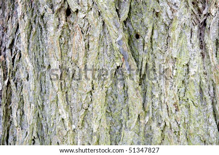 A close up of the bark of a tree