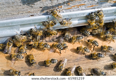 A close up of the bees on hive at hole. - stock photo