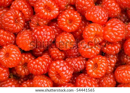 A close up of the berries of wild raspberry. - stock photo