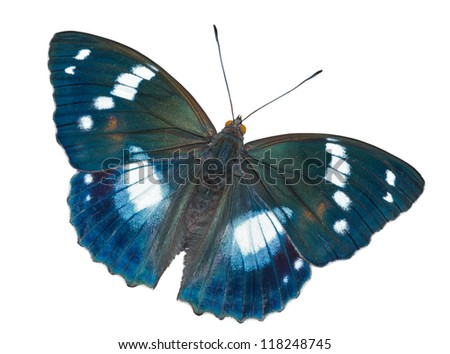 A close up of the butterfly (Apatura schrencki). Isolated on white.