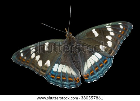 A close up of the butterfly (Limenitis populi ussuriensis). Isolated on black.