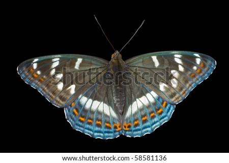 A close up of the butterfly (Limenitis populi ussuriensis). Isolated on black. - stock photo