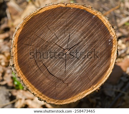 A close up of the cut of tree. - stock photo