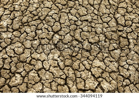 A close-up of the dry, parched soil.