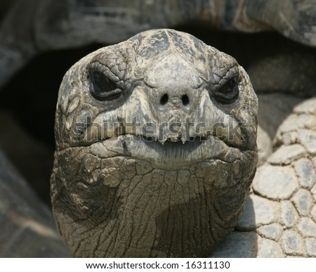 A close up of the face of a galapagos turtle. - stock photo