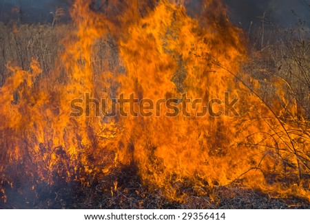 A close up of the flame of brushfire.