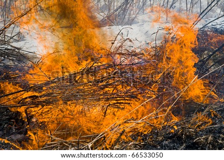 A close up of the flame of brushfire. Early spring. - stock photo