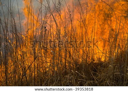 A close up of the flame of brushfire. Spring. - stock photo