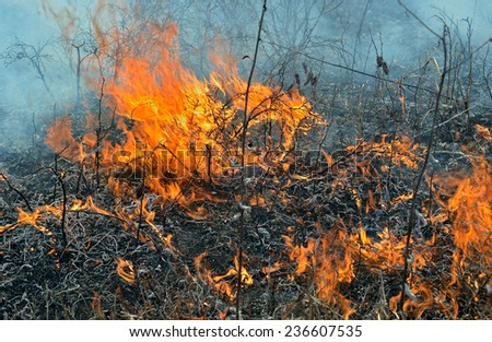 A close up of the flame on brushfire. - stock photo