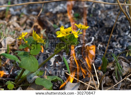A close up of the flowers on way of a forest fire. - stock photo