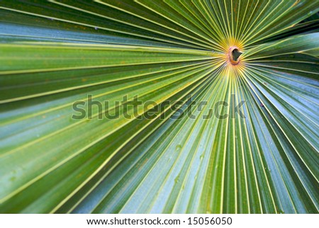 A close up of the lines and patterns contained within a Palm leaf or frond