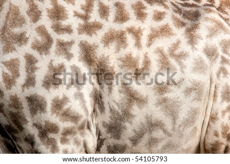 A close up of the pattern on the skin of a giraffe.