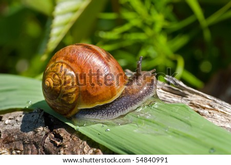 A close up of the snail on grass-blade.