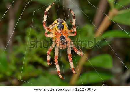 A close up of the spider on spider-web. - stock photo