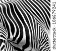 A close-up of the stripes of a zebra. - stock photo