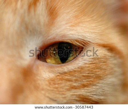 A close up of the yellow eye of a red tabby cat. - stock photo