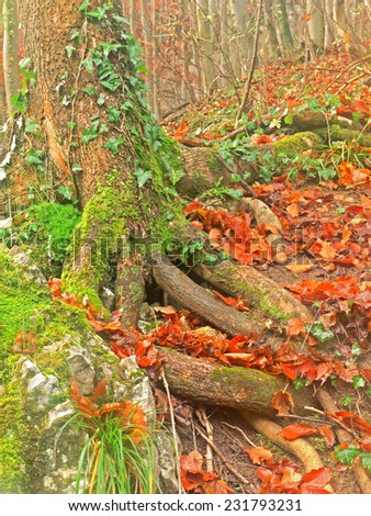 A close-up of tree roots.  - stock photo