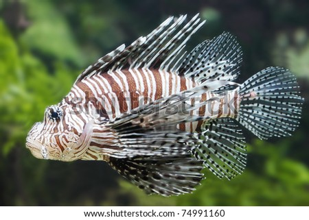 A close up photo of a beautiful tropical sea fish