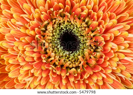 A close up photo of a beautiful yellow flower - stock photo