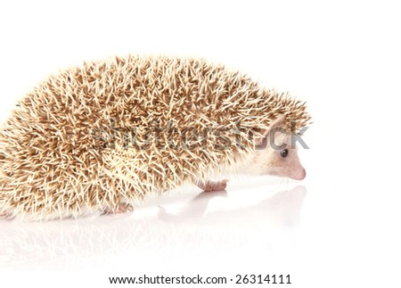 a close up photo of a hedgehog