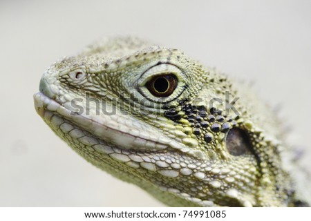 A close up photo of a little, tropical lizard - stock photo