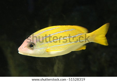 A close up photo of a little, tropical, sea fish