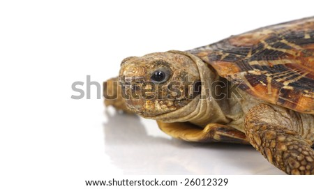 a close up photo of a tortise