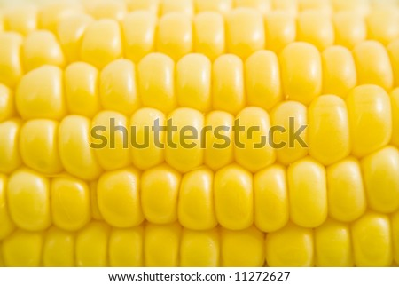 A close up shot of a fresh ear of corn - stock photo