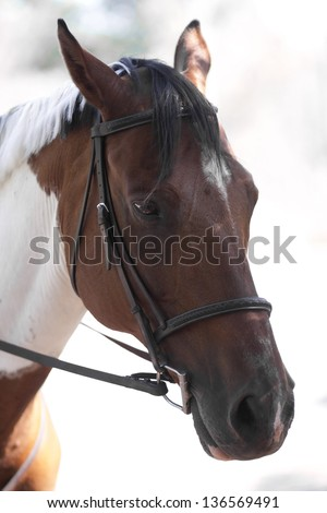a close up shot of a horse's head against a bright backdrop. the horse gives off the feeling of sadness with its expression