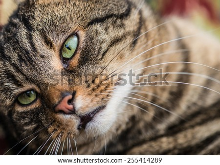 A close-up shot of a tabby cat, focussing on a green eye. - stock photo
